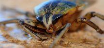 desinsectisation blattes