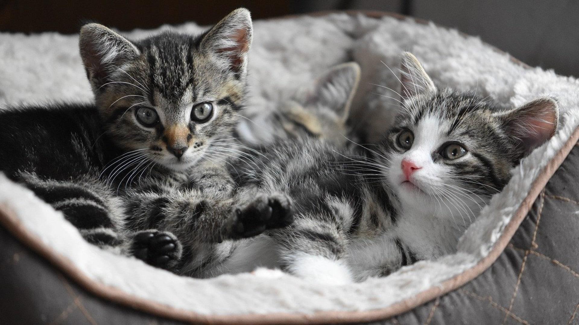 Les chats aussi ont le droit d'être de grands gastronomes !